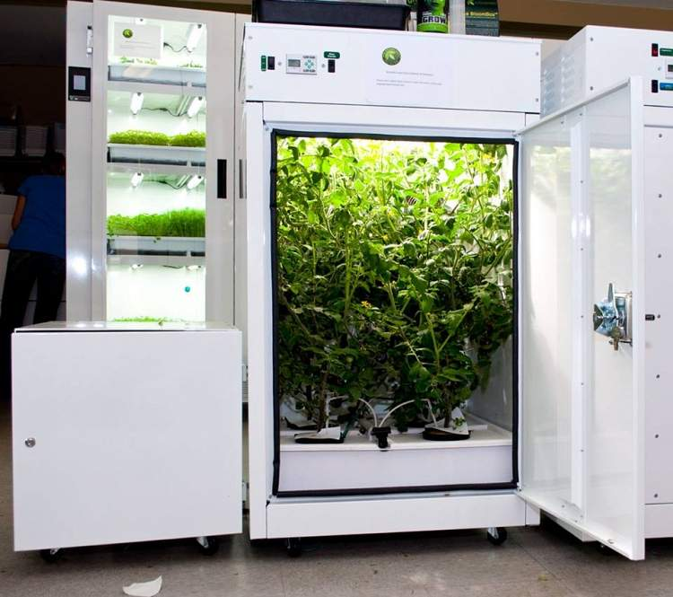Bc Northern Lights Surrey Vancouver Hydroponic Systems